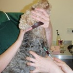 Cushings Disease