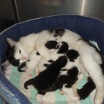 Puppies and kittens dietary advice