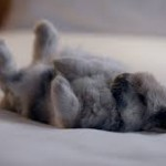 The Ibis rabbit advert  - accidentally highlighting a real rabbit issue