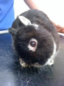 rabbit head tilt