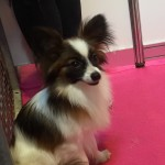 The Good, the Bad and the (cute but) Ugly! Crufts 2016 part one