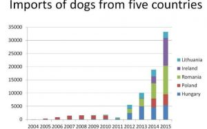 puppy-imports-graph-rspca