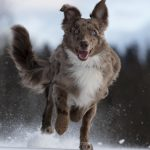 How Do You Know If Your Dog Has A Healthy Microbiome?
