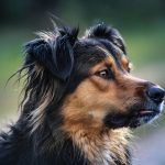 Do You Know About Canine Brucellosis?